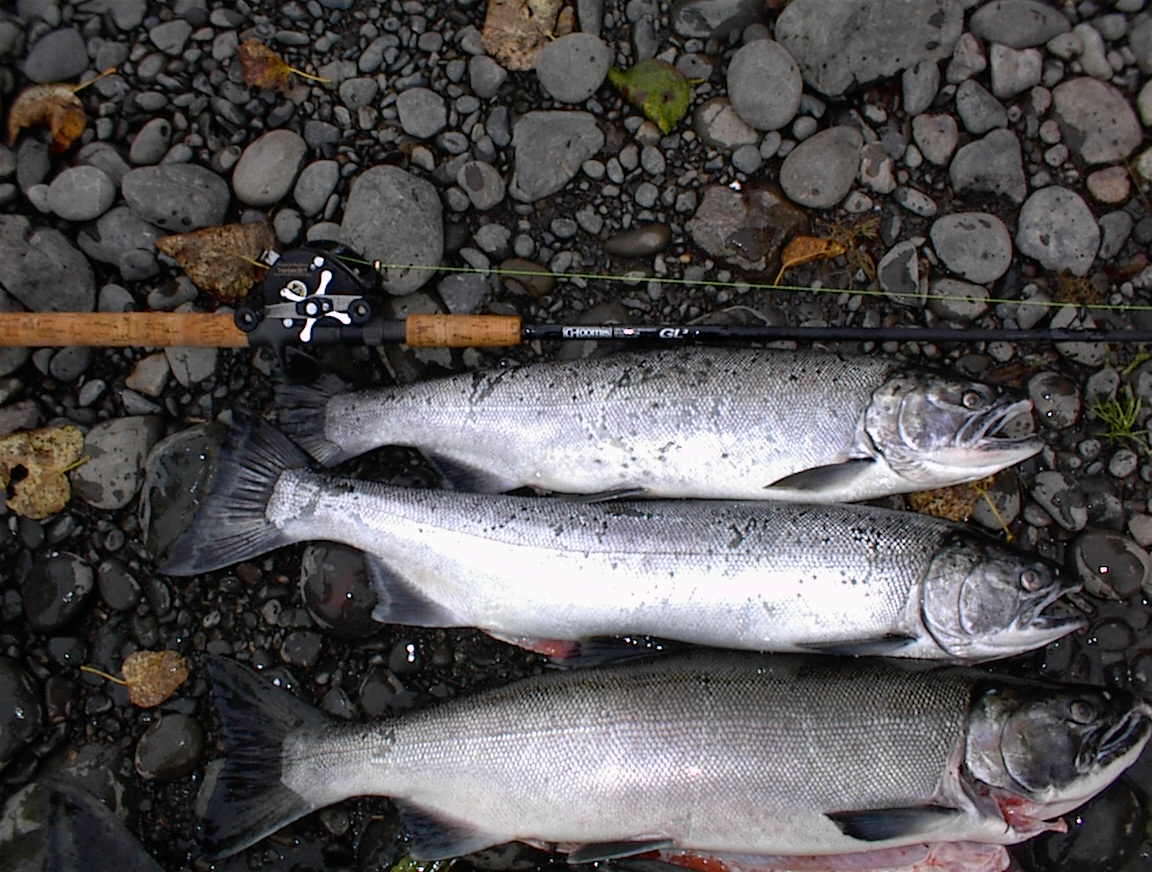 A Creel of Fall Salmon