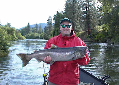 Icicle River Spring Chinook Salmon
